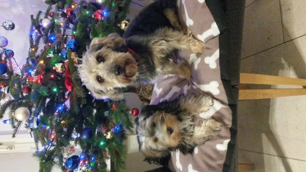 Hunde Foto: margot und Gismo und Sami - Papa mit Tochter