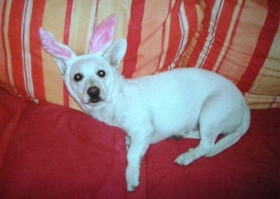 Hunde Foto: Johanna und Sofie - Ich liebe es auf der Bang zu Ligen