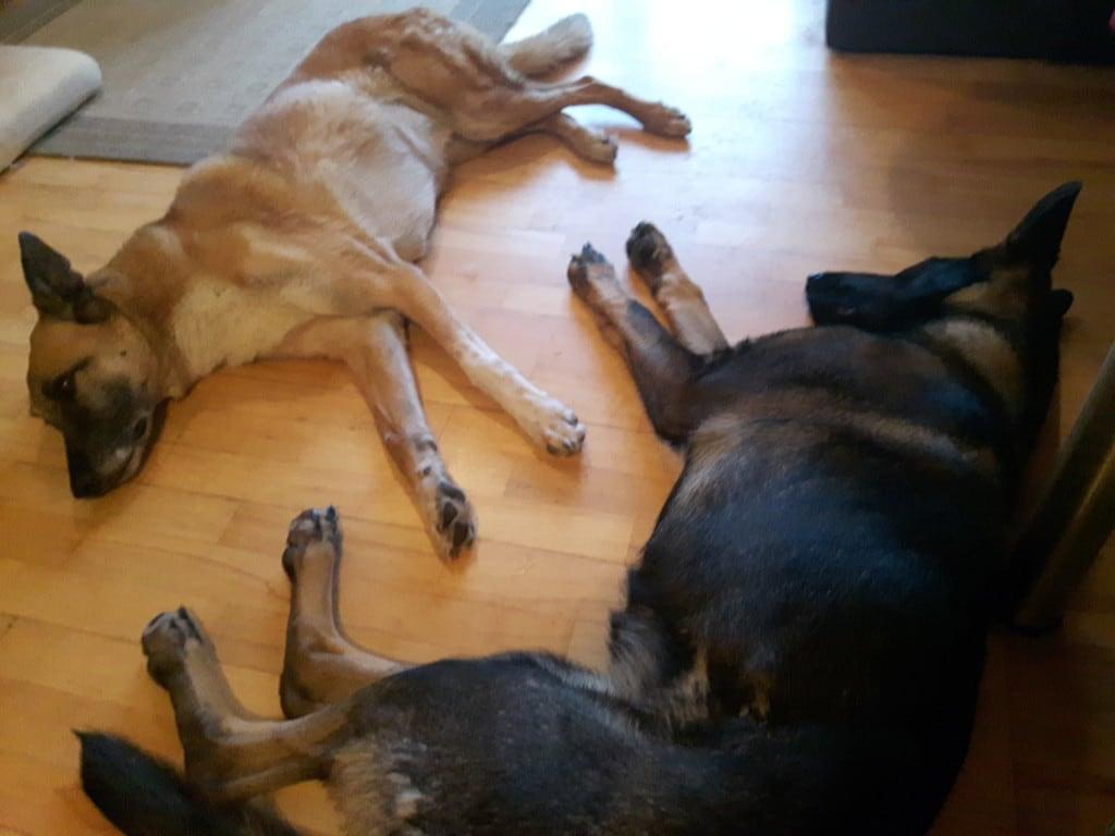 Hunde Foto: Tanja und Flash & Shakira - meine zwei gegenstücke .....
