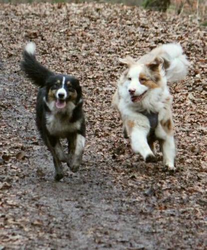 Hunde Foto: Silvia und Mila und Yuma - Geschwisterliebe