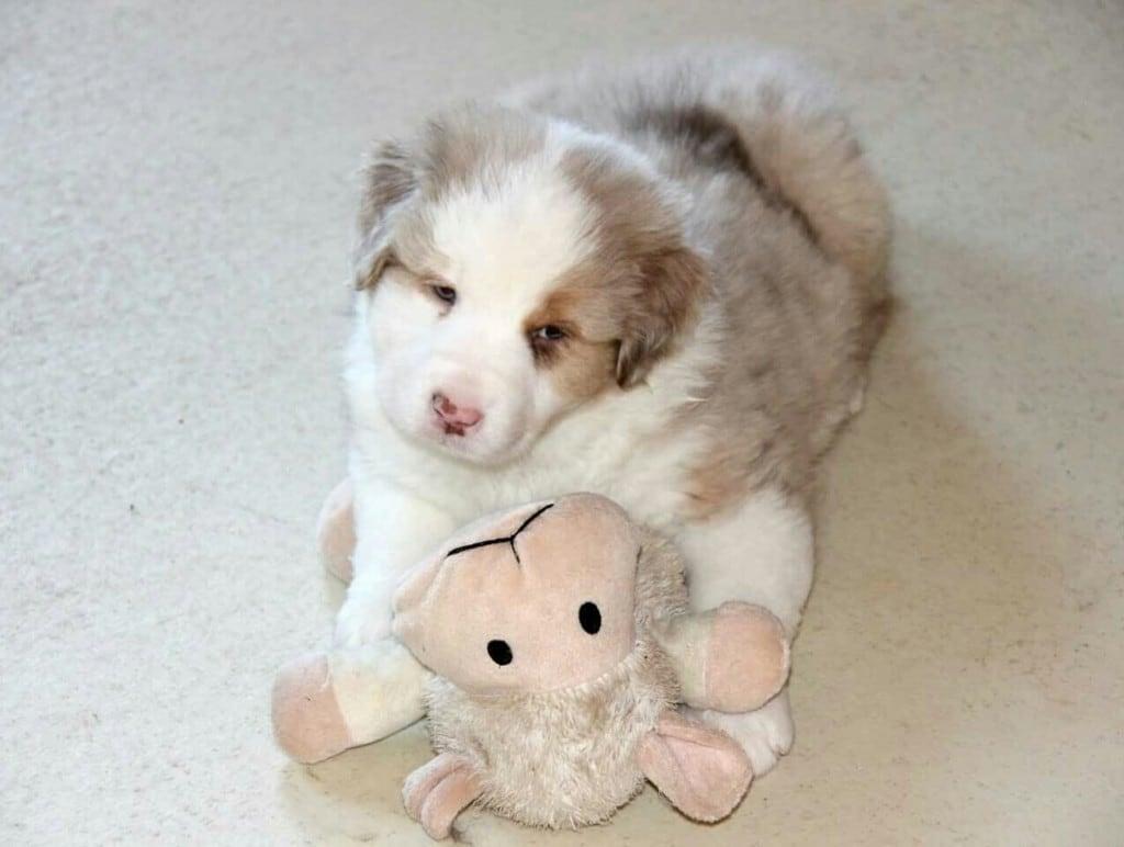 Hunde Foto: Silvia und Yuma - Baby Yuma