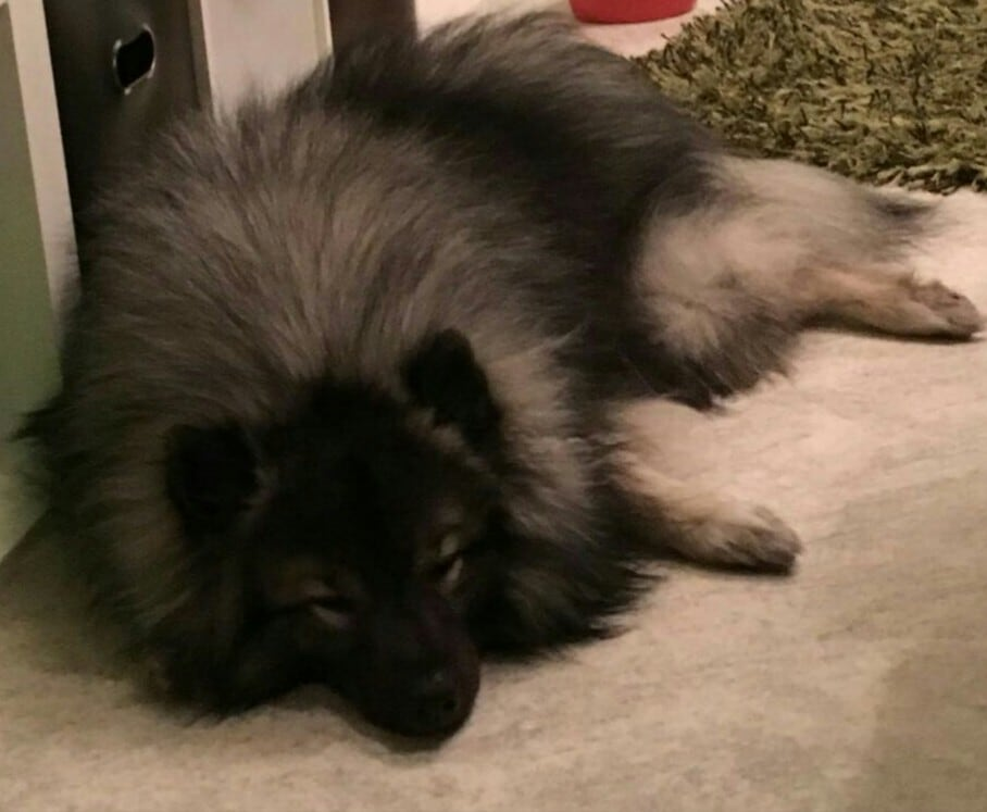 Hunde Foto: Rene und Collin - Soooooo müde ?☺