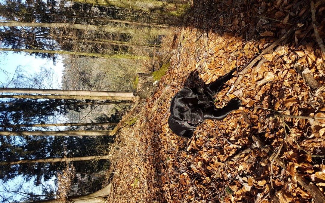 Hunde Foto: Jonas und Balu – Sonne tanken