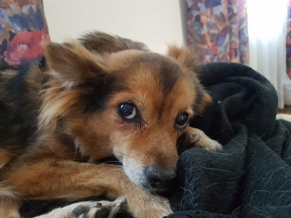 Hunde Foto: Gerlinde und LILO - Lilo - 15 !! Jahre
