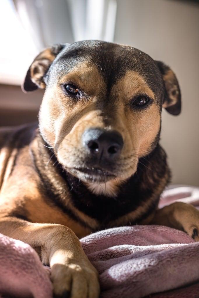Hunde Foto: Andreas und He-Man - Mein He-man
