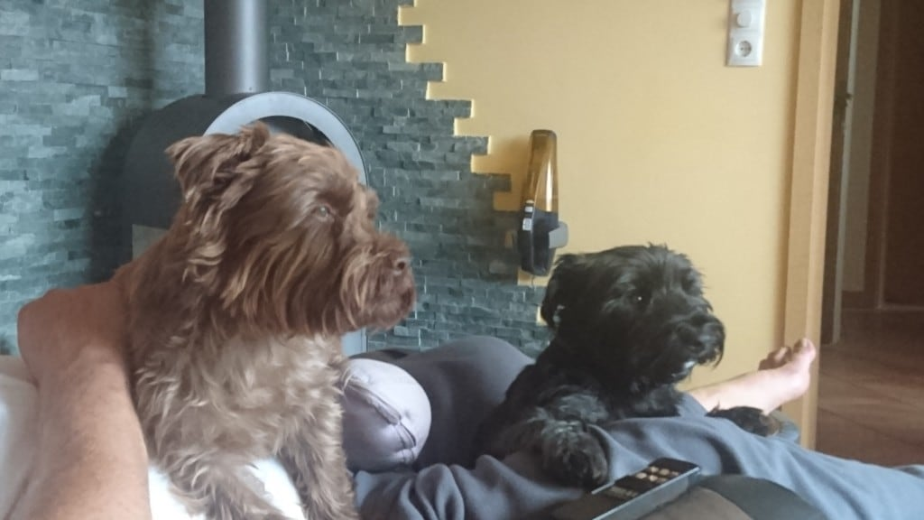 Hunde Foto: Ursula und Carl (rechts) und Paul - Schönste Zeit des Tages.