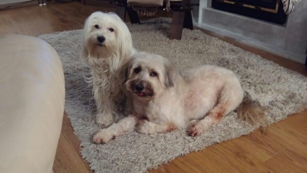 Hunde Foto: Tina und Amy - Da war die Hundewelt noch in Ordnung