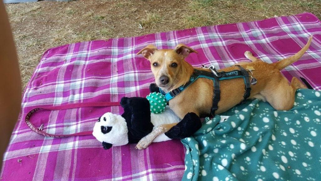 Hunde Foto: Célina und Luna - Spielzeug darf im Urlaub auch nicht fehlen.