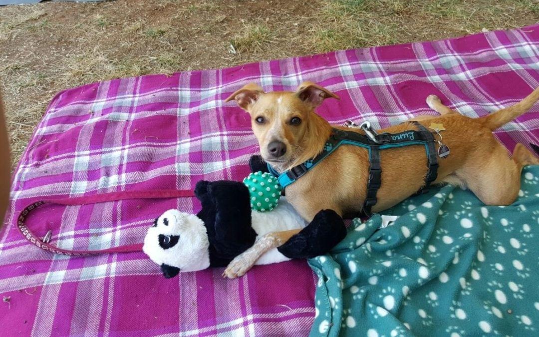 Hunde Foto: Célina und Luna – Spielzeug darf im Urlaub auch nicht fehlen.