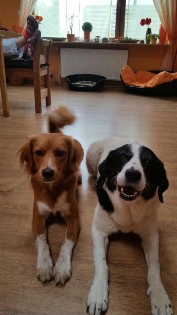 Hunde Foto: Ralf und SAM & AFRA - Meine liebsten ❤