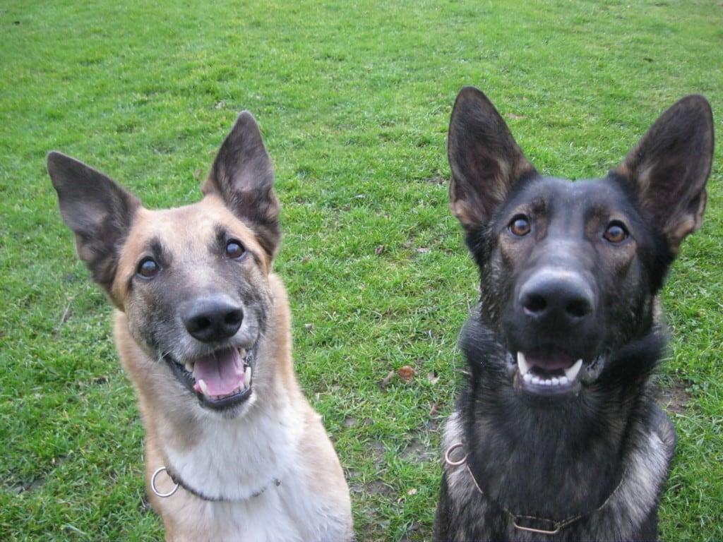 Hunde Foto: Tanja und Flash & Shakira - Guten morgen und habt a schönes Wochenende !!!!!!