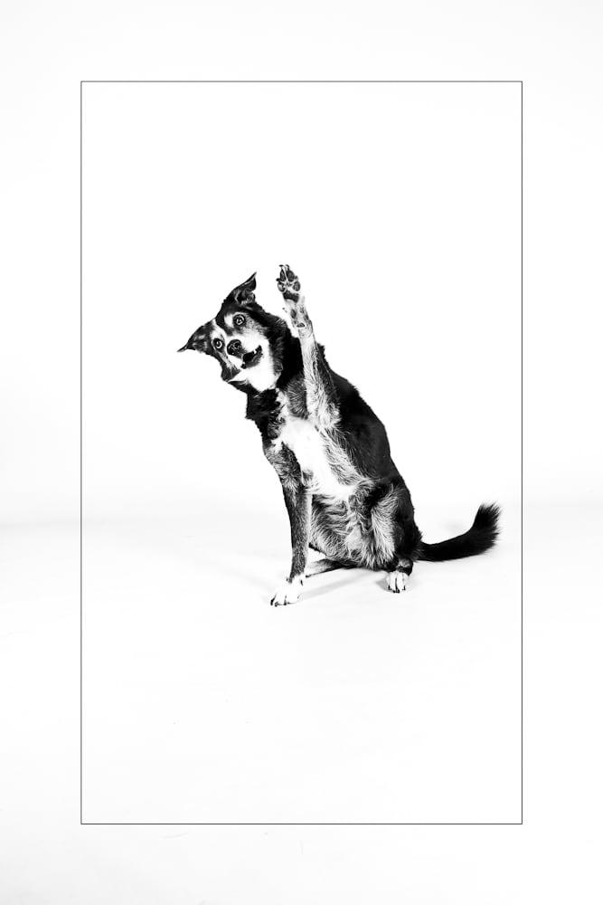 Hunde Foto: Tanja und Fly - Hallöööööchen.....