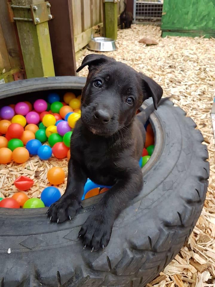 Hunde Foto: Tanja und Gerben - Spielst mit mir ?????