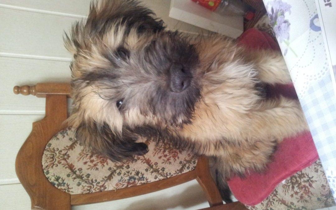 Hunde Foto: Cindy und Elli – Mein Würstchen