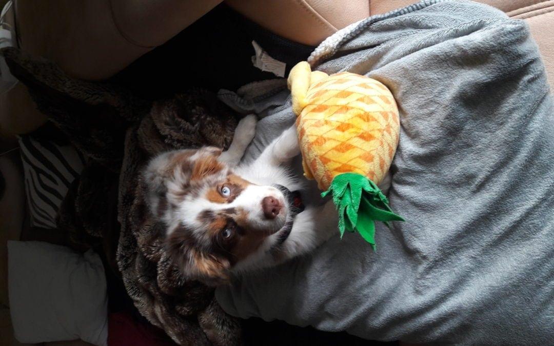 Hunde Foto: Jessi und MILA – Klein Mila