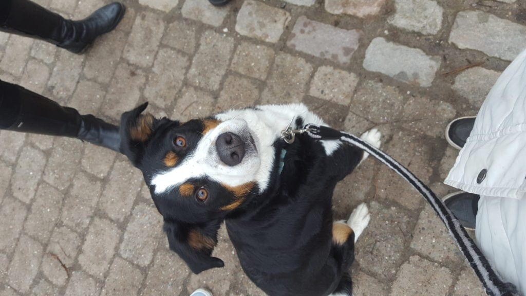 Hunde Foto: Bianca und luna - Einfach zum dahinschmelzen