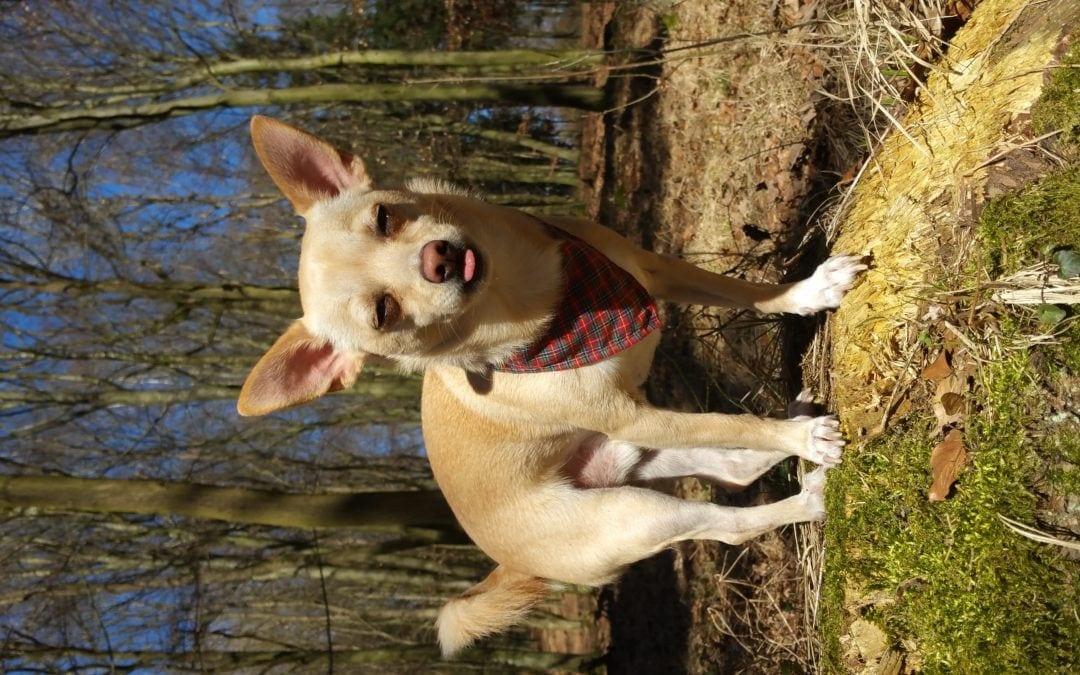 Hunde Foto: Gita und Marlon – Ällabätsch