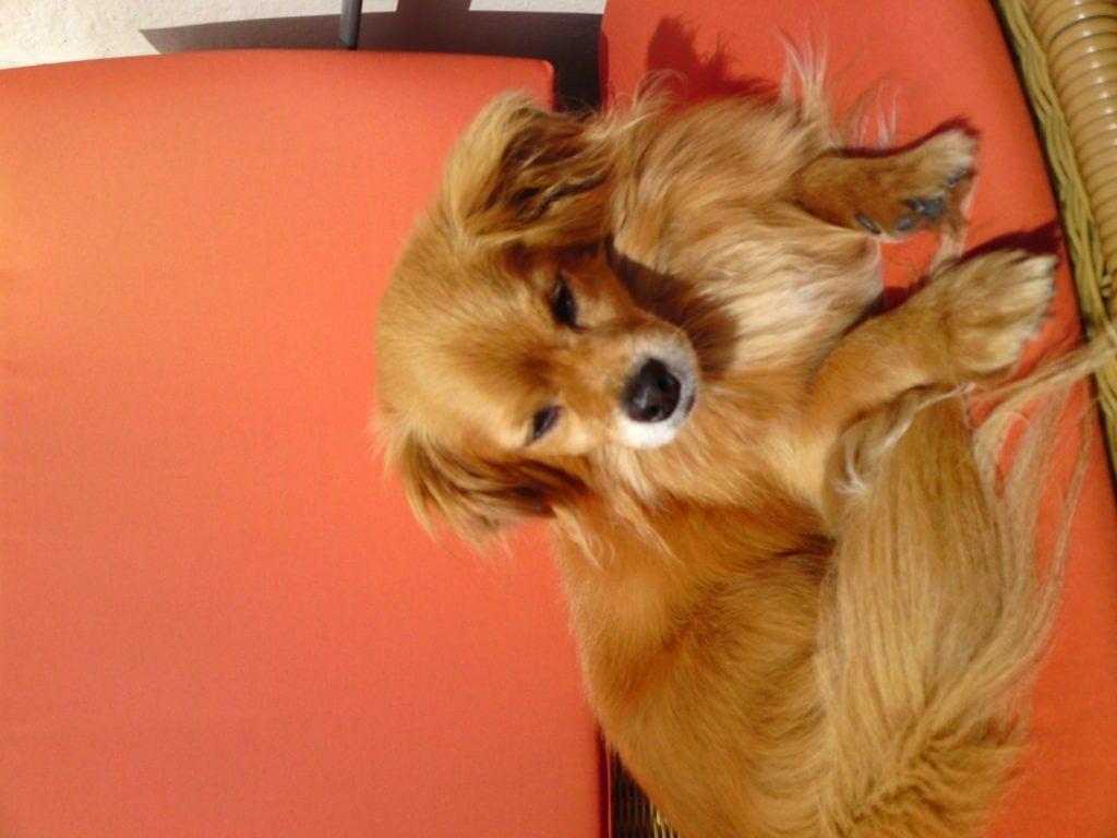 Hunde Foto: Christel und Benny - Endlich Sonne