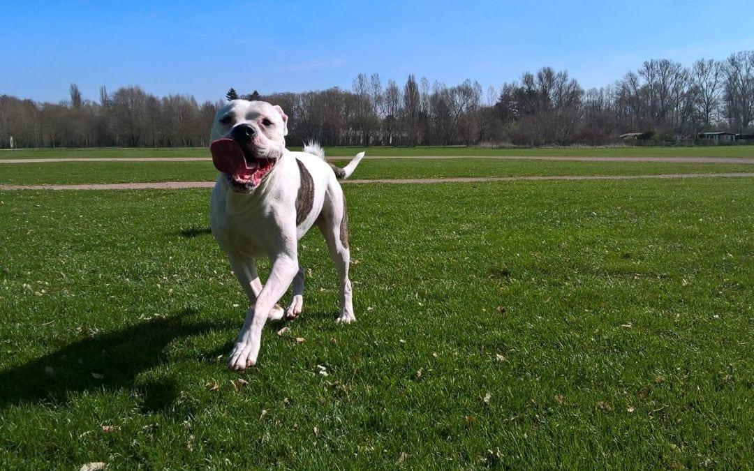 Hunde Foto: Heidi und Hunter – Because I'm happy