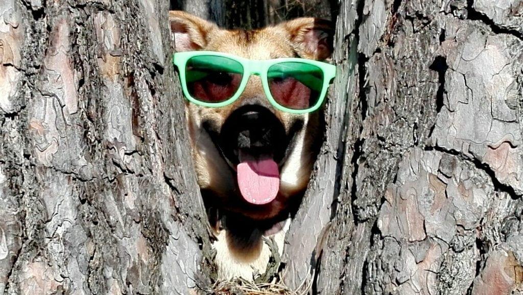 Hunde Foto: Jenny und Dixon - It's cool man ??