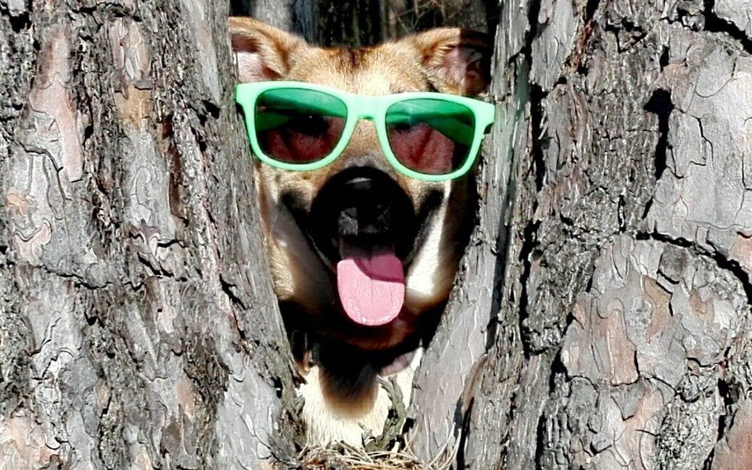 Hunde Foto: Jenny und Dixon – It's cool man ??