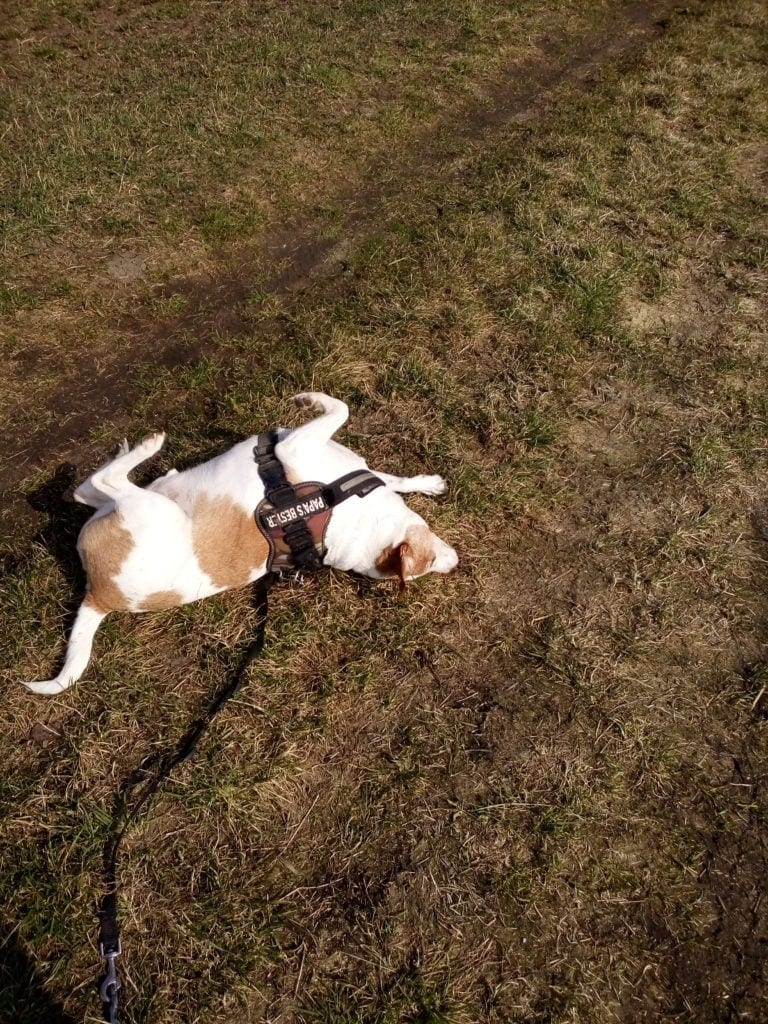 Hunde Foto: Kerstin und Giacomo - Sonnenanbeter