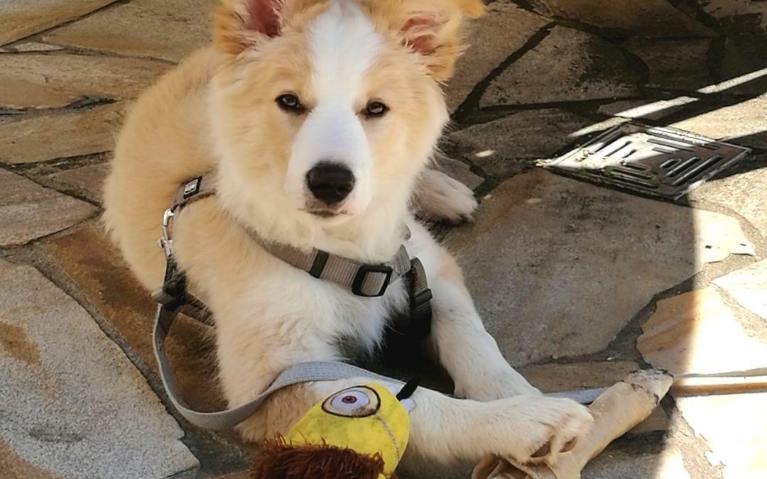 Hunde Foto: Kira und Lenny – Wetter genießen ;)