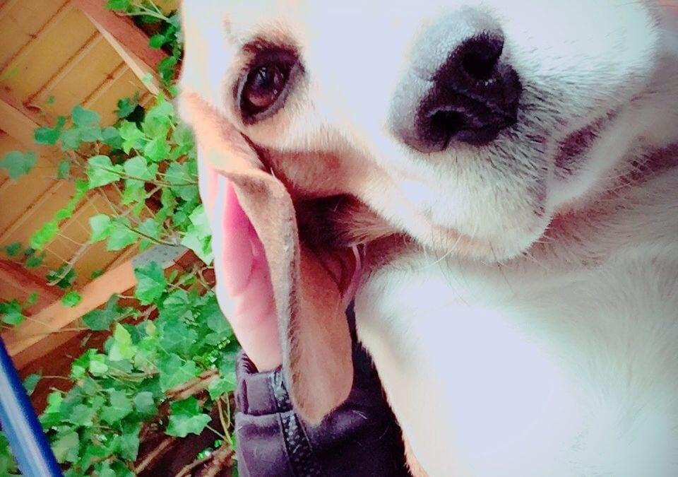 Hunde Foto: Sophia und Trixi – Da ist jemand neugierig ?