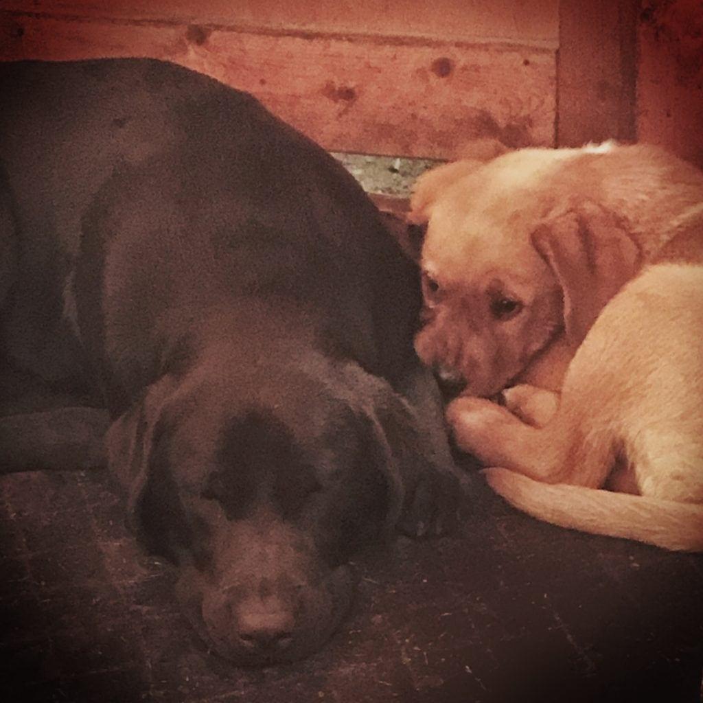 Hunde Foto: Bea und Gandhi und Liza - Hundeschlaf ist heilig! :)