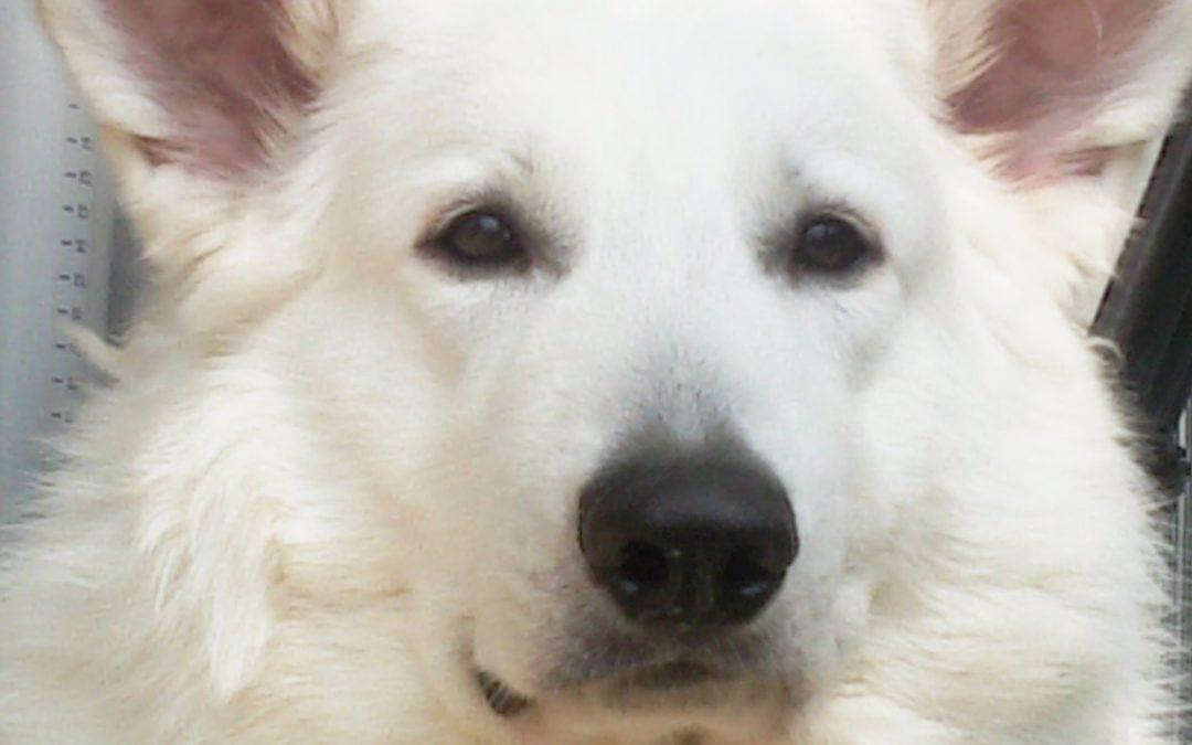Hunde Foto: Karola und Polar – Treuer Freund