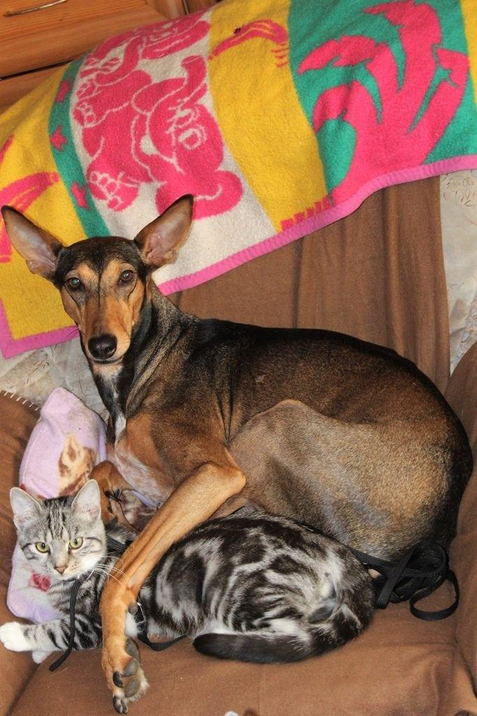 Hunde Foto: Corinna und Rubinia (Ruby) - Ein Leben ohne Hund ist möglich aber sinnlos