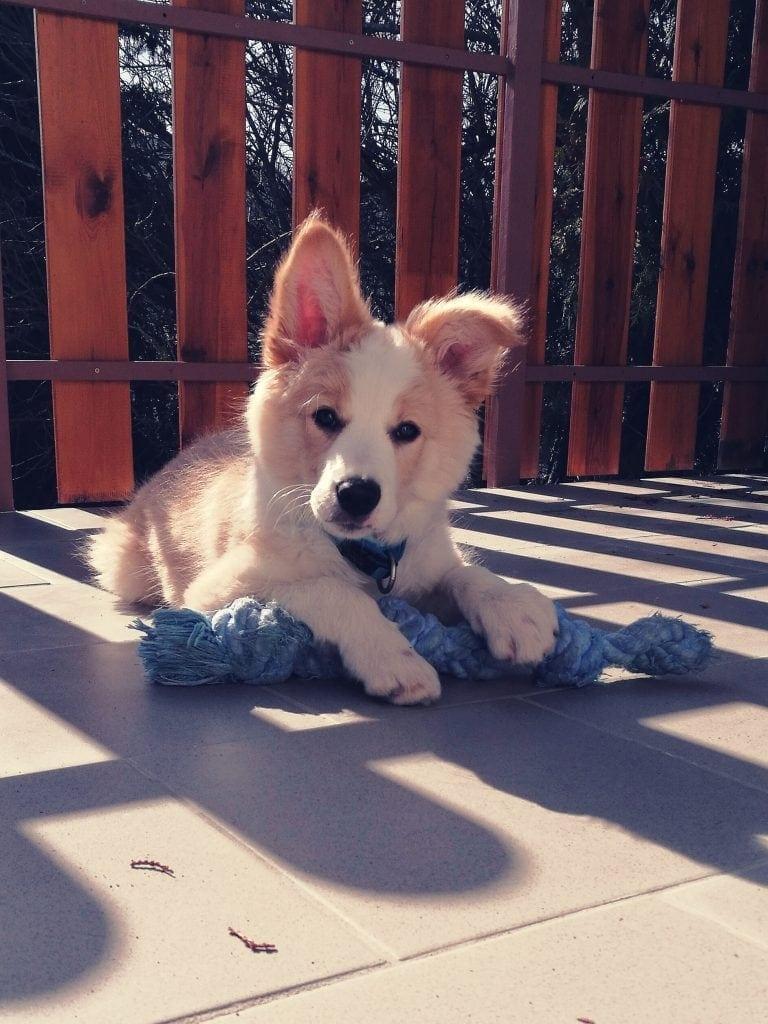 Hunde Foto: Kira und Lenny - Süßer
