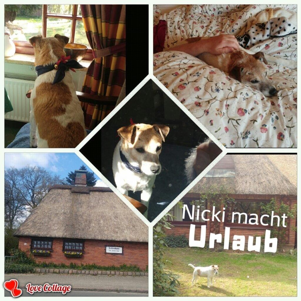 Hunde Foto: Marilena und Nicki - Urlaub im Norden
