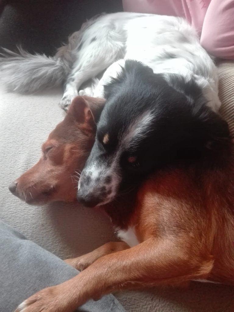 Hunde Foto: Mirko und Bruno und Mimi - Buddys für immer