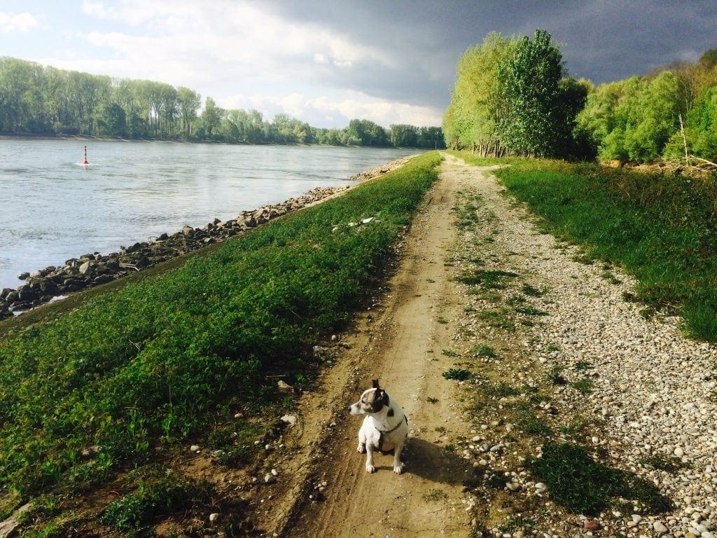 Hunde Foto: Melanie und Sancho - Genieße das Leben