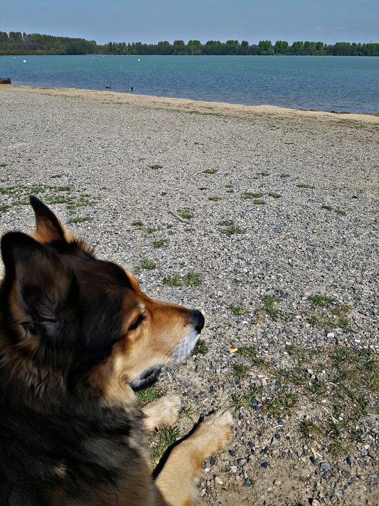 Hunde Foto: Micha und Mogli - Enten gucken