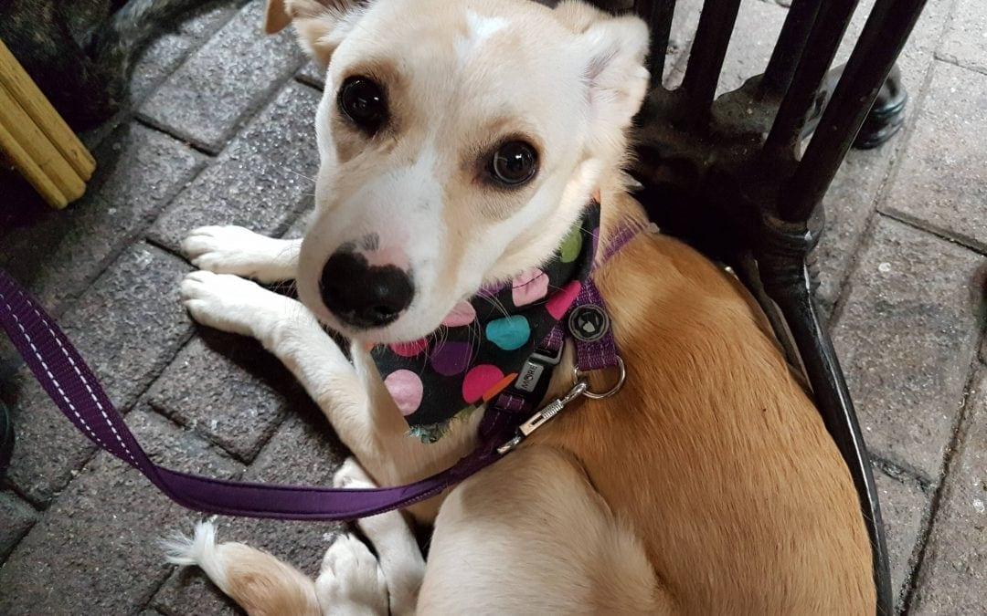 Hunde Foto: Bianca und Bella – Meine Herznase