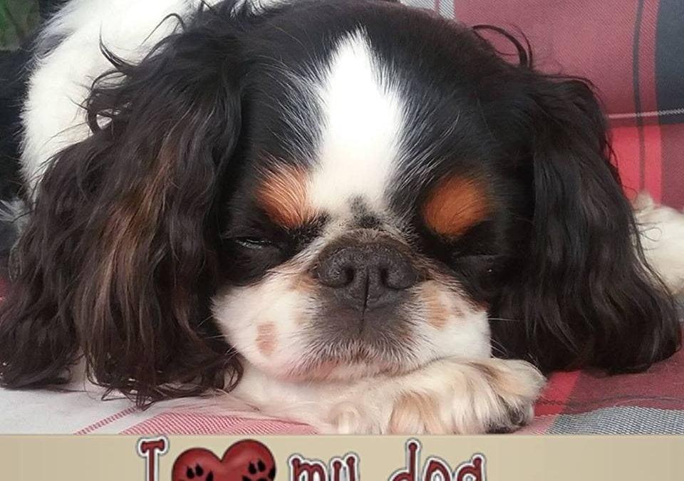 Hunde Foto: Renate und Chayenne – Chayenne unser neues Familienmitglied