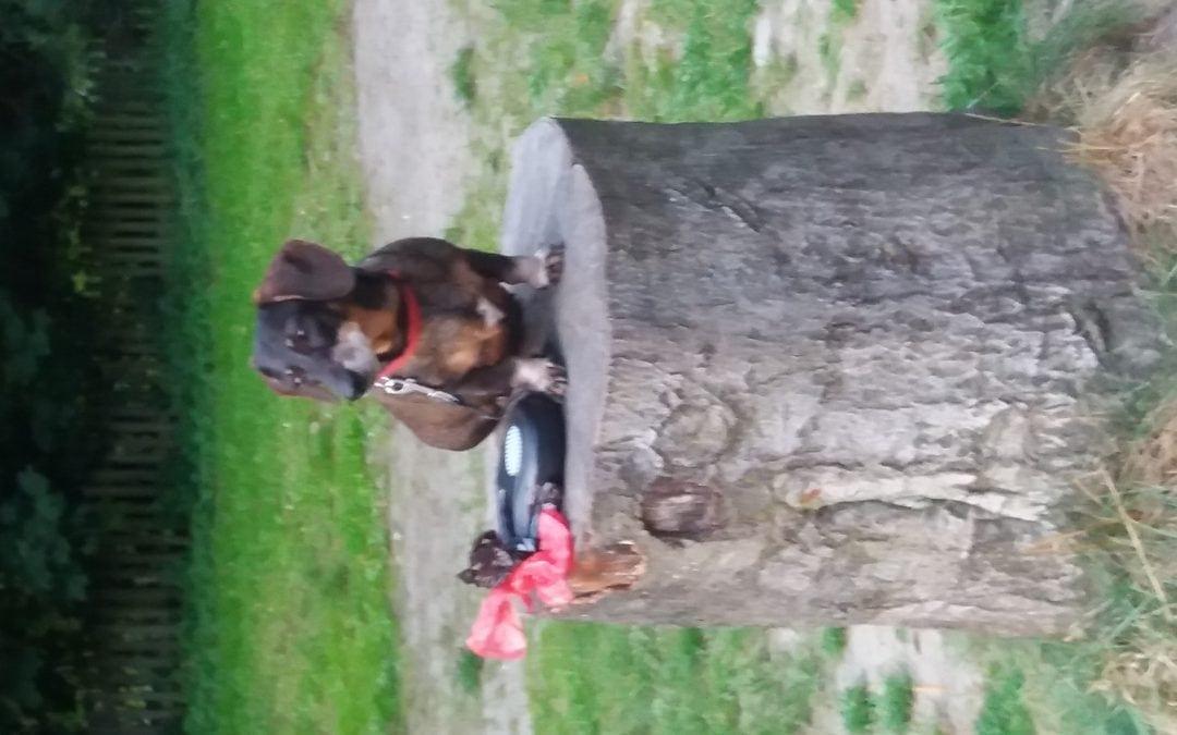 Hunde Foto: Ingrid und Merle – Denkmaldackel