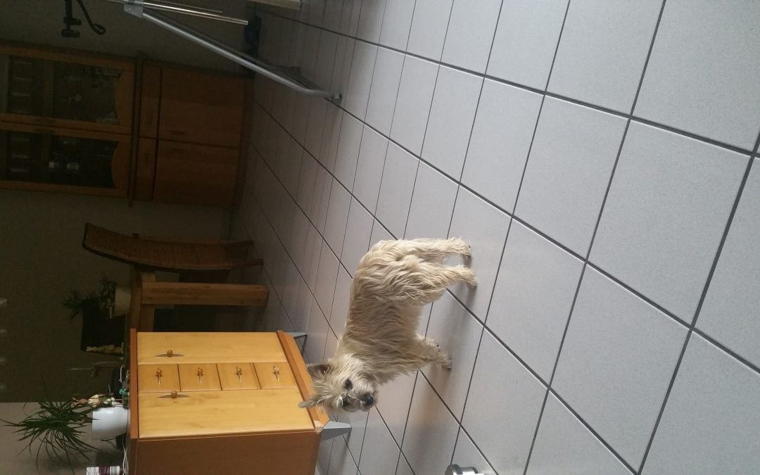Hunde Foto: Wilfried und Amy – Keiner will mit mir spielen