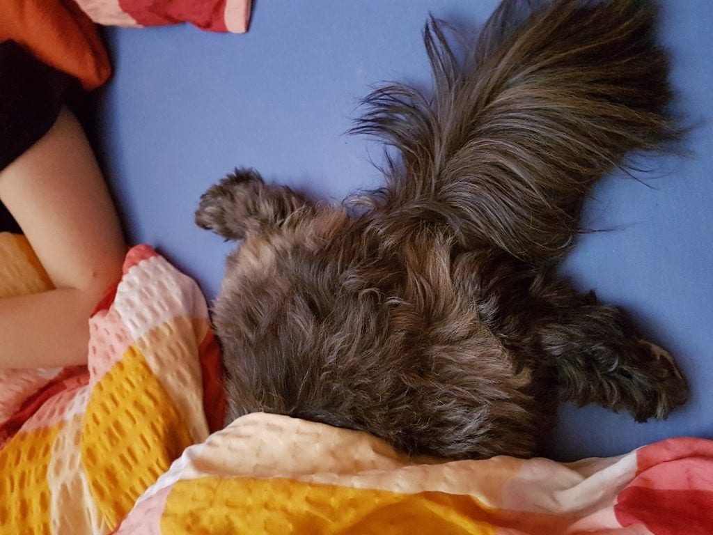 Hunde Foto: Melanie und Chipsy - Ich will nicht, lass mich...
