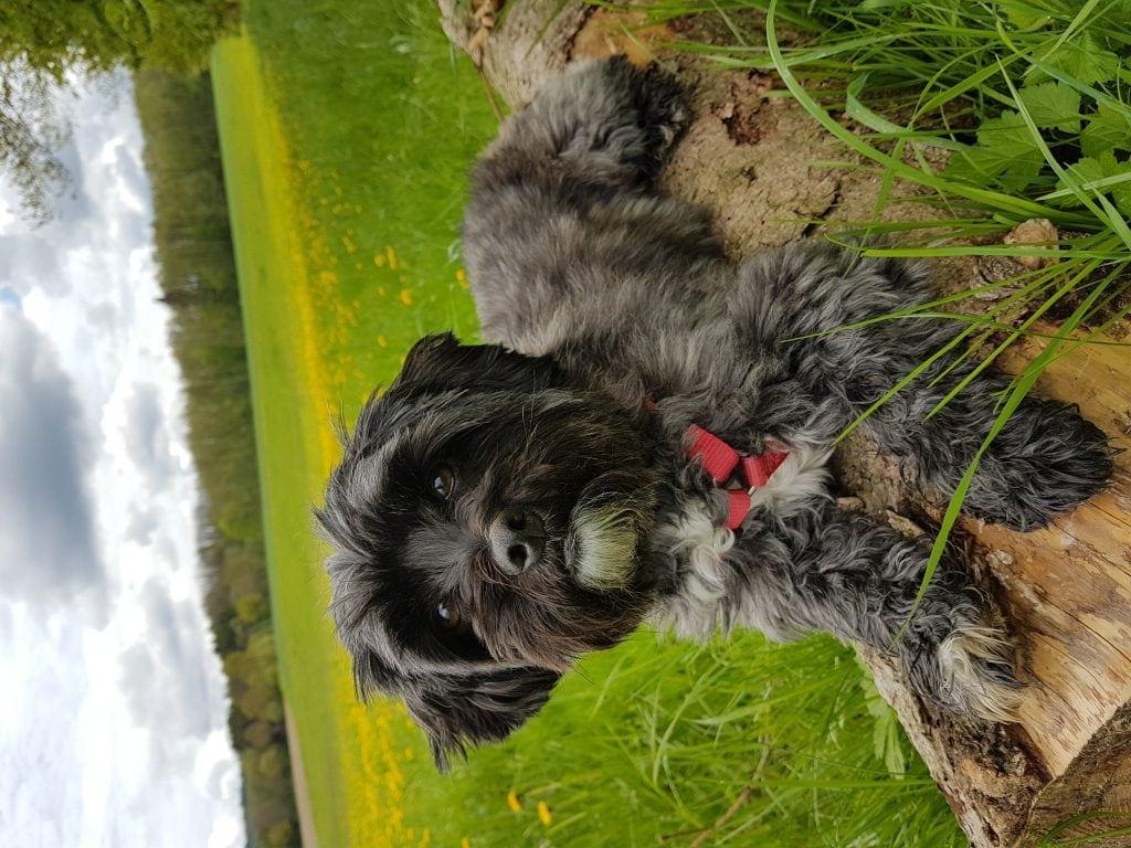 Hunde Foto: Melanie und Chipsy - Pause