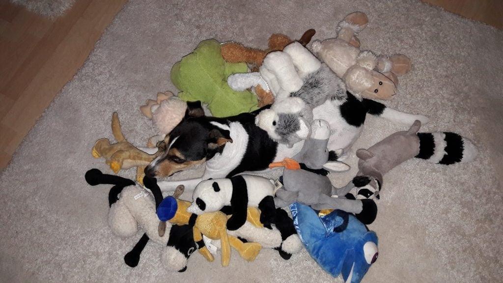 Hunde Foto: Sandra und Sam - Naja....Wer findet ihn ?