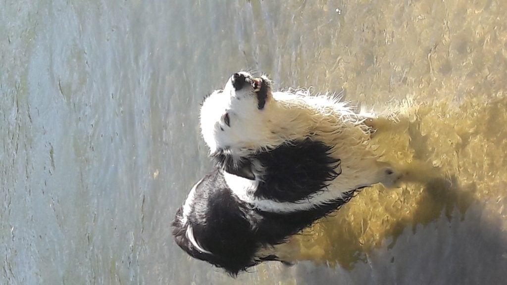 Hunde Foto: Silvia und Snoopy - Wasserratte Snoopy