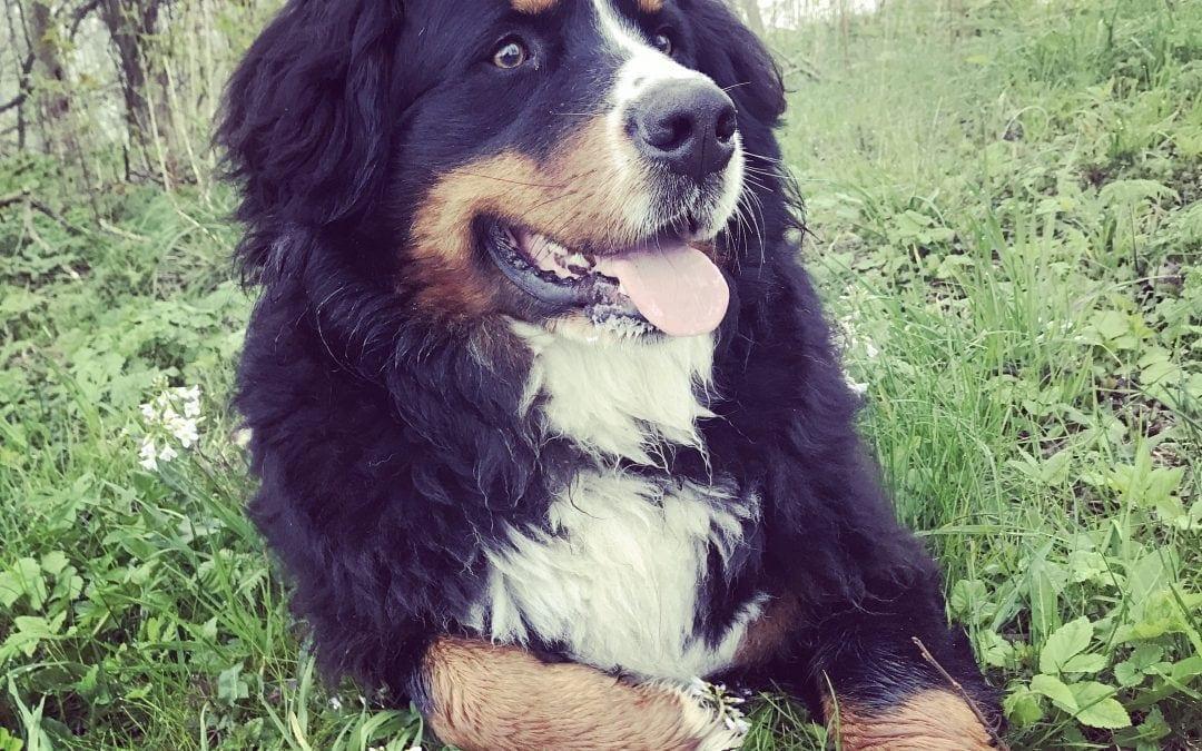 Hunde Foto: Evelyn und Alfred – Rumliegen und sperrgusch'n … mein größtes Glück