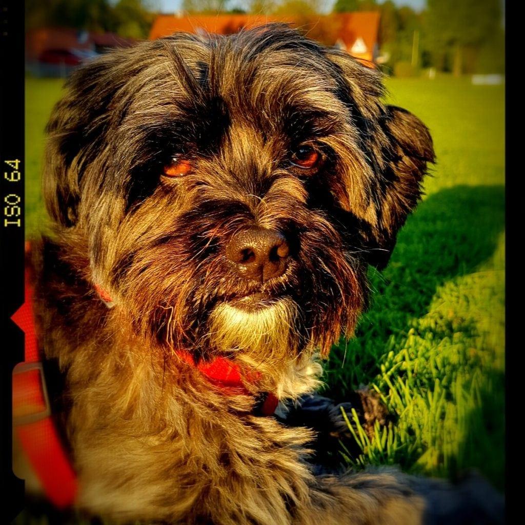 Hunde Foto: Melanie und Chipsy - Die sonne genießen