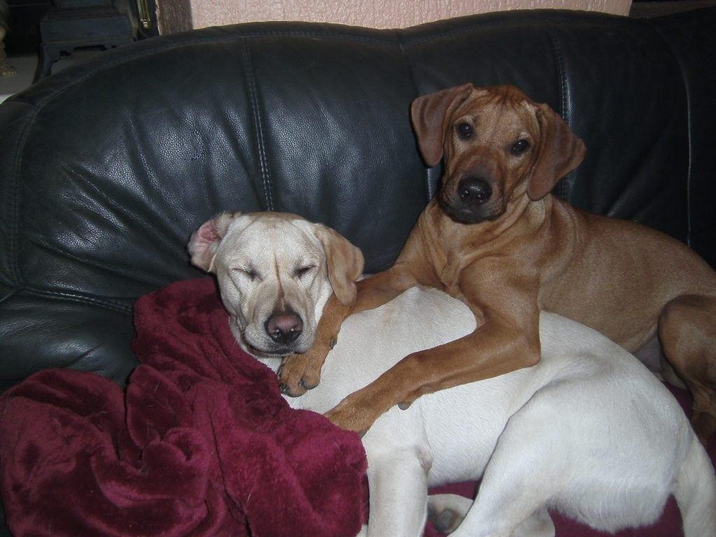 Hunde Foto: Bettina und Oskar und Ashanti - Die kleinen