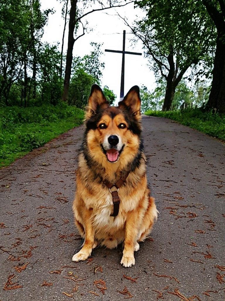 Hunde Foto: Micha und Mogli - LUCKY Dog