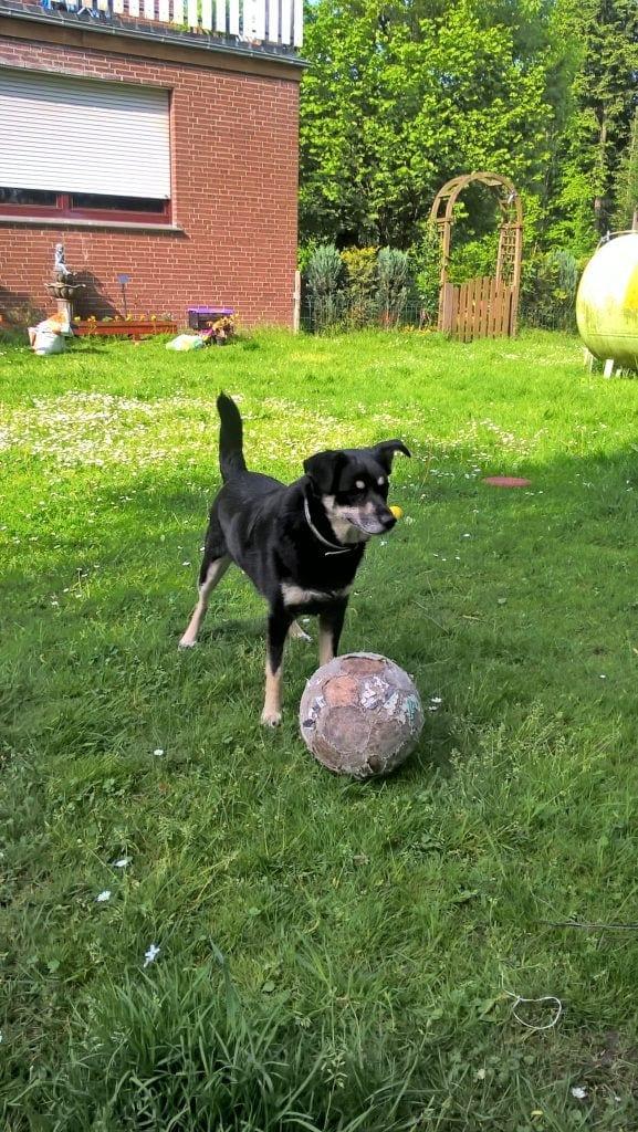 Hunde Foto: Thomas und Diesel - Ein Tag im Garten !