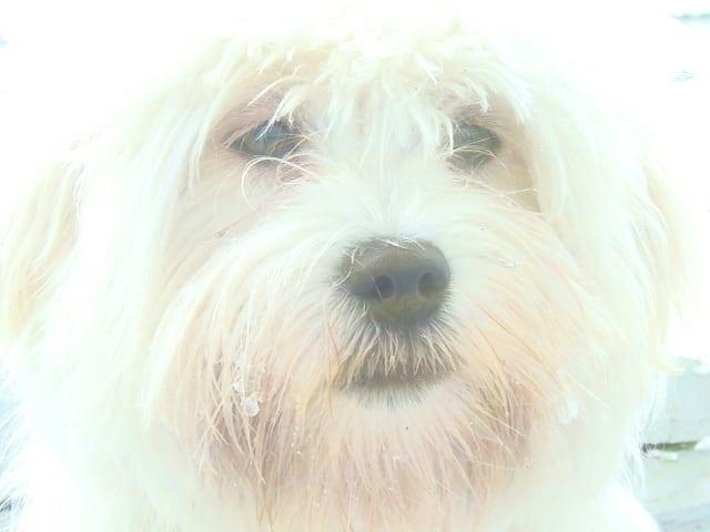 Hunde Foto: andreas und Luba – Unser Knöpchen
